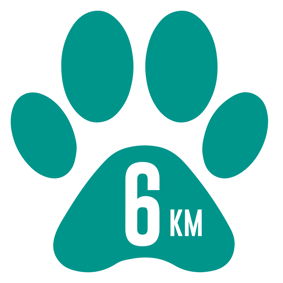 Canicross 6km